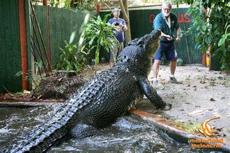 worlds largest worlds largest crocodile