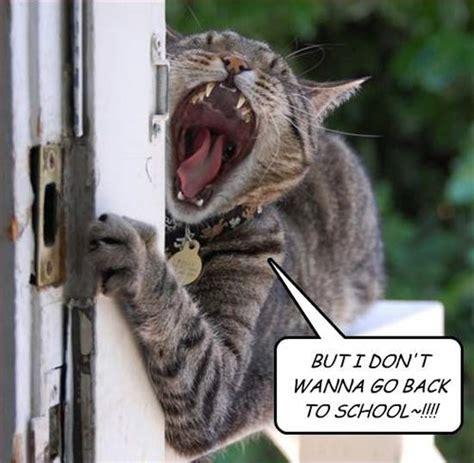 school time parents rejoice team jimmy joe