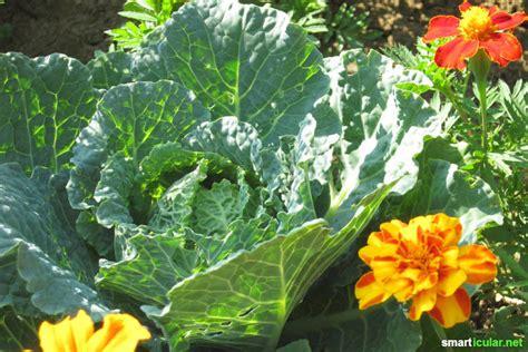 garten versand pflanzen pflanzen gegen schnecken gartenversand richard ward