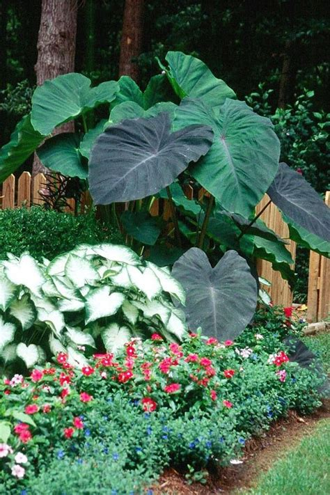 Tropical Gardening Ideas Amazing Tropical Garden Design Ideas Gardening