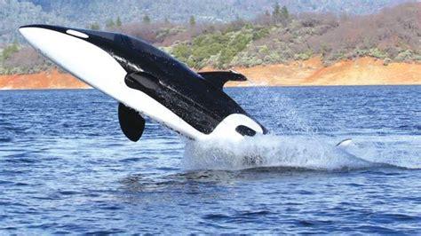 dolphin boat boat or dolphin timesofmalta
