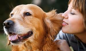how to talk to dogs how to talk to your researchers say using your and a high pitched voice is