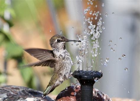 77 best images about hummingbird fountains on pinterest