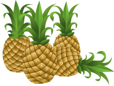 clipart pineapple pineapple clip art at clker vector clip art online