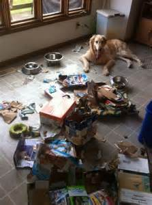 Small Dogs Left At Home What Do Dogs While The Owner Is Not Home Oddities