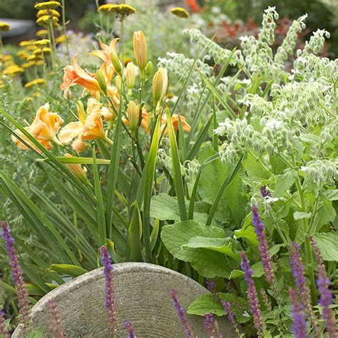 Plants For Butterfly Garden by Plant A Butterfly Garden