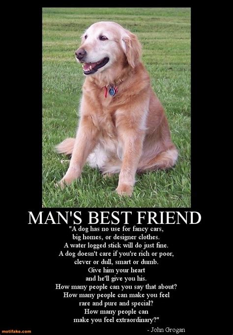 best friend puppies best friend quotes like success