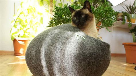 best cat beds 1 is so cool superwhiskers