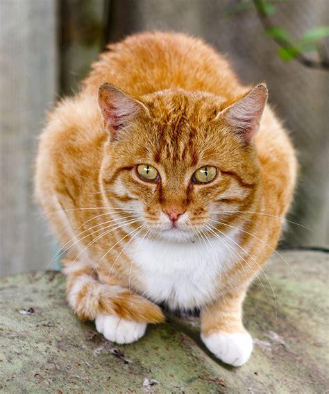 theme names for litter of kittens names for orange cats cats kittens