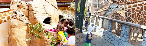 emirates zoo ticket offers emirates park zoo tour trip book online
