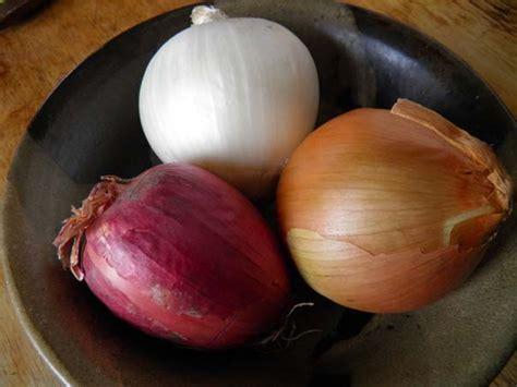 onion medicinal herb info herbal roots zine onion as medicine herbal roots zine