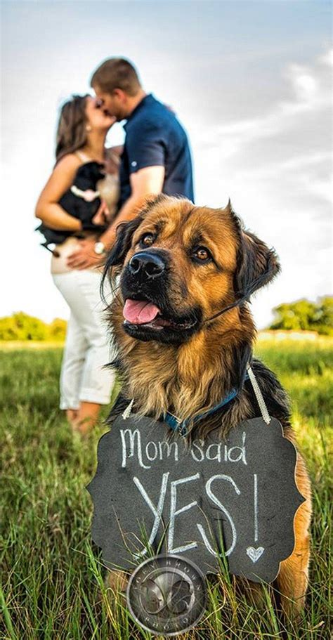 engagement photos with dogs 18 best engagement announcement photo ideas page 3 of 4 oh best day