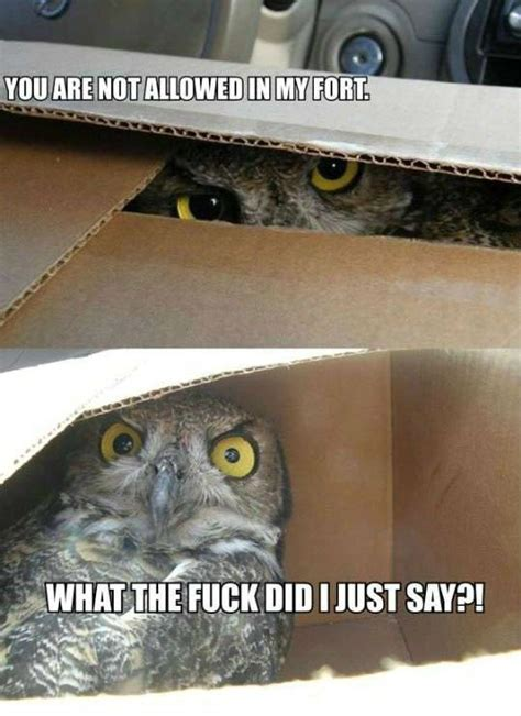Who Owl Meme - 20 hilariously adorable owl memes