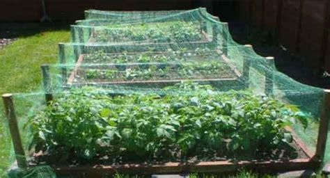 vegetable gardening ideas picturespng