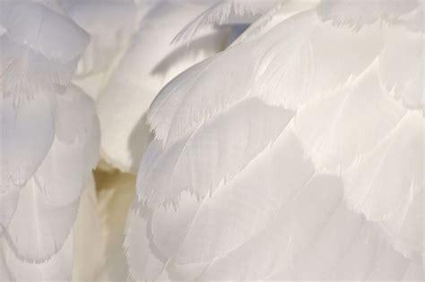 almohadas de plumas las mejores ofertas de almohadas de plumas almohada10