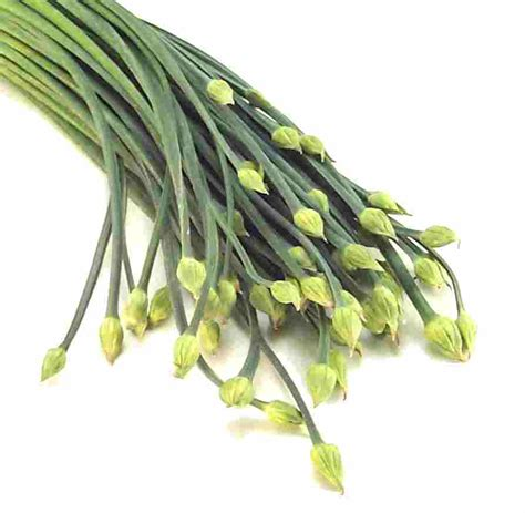 chive com garlic chives nutrition facts health benefits uses and