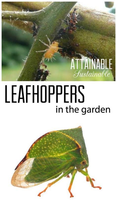 112 Best Gardening Pest Control Images On Pinterest Organic Pesticides For Vegetable Garden