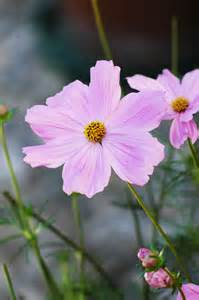 free flower pictures