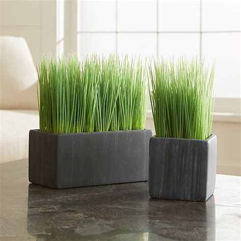 potted grasses crate  barrel