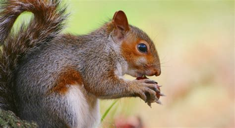 flying squirrels diets