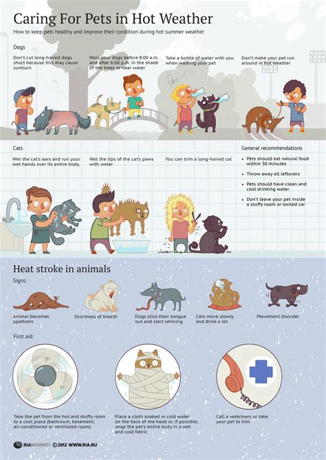 How To Keep Pets by Caring For Your Pets In Weather Infographic Daily