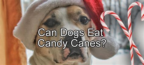 can dogs eat limes sugar pethority dogs