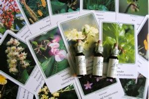 fiori di bach ipertensione i fiori di bach altrasalute