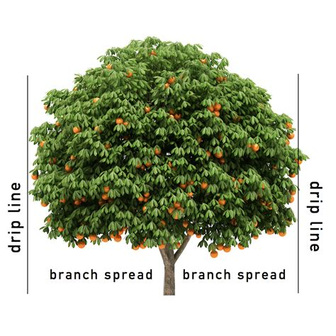 organic fertilizer fruit trees jobe s organics fruit citrus fertilizer