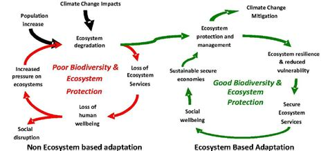 the cycle of poverty diagram beating the vicious cycle of poverty ecosystem