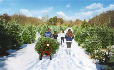 christmas tree farms in mystic ct mystic aquarium visit ct
