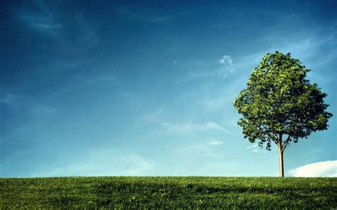 asus wallpaper tree tree free asus google nexus 7 wallpaper download