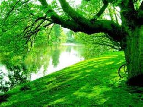 imagenes jpg naturaleza verde el color de la naturaleza viva el blog de