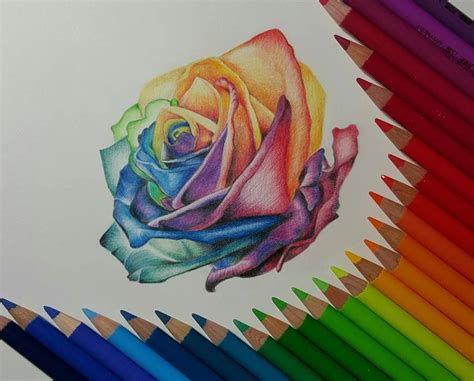 Rose Color Pencil Drawing By Gaby Sabbagh Drawing Top Beautiful Color Images