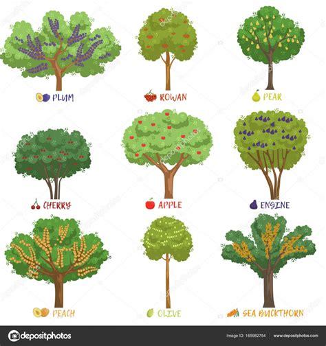 Nomi Di Arbusti E Cespugli by Alberi Da Frutta Diversi Tipi Con Nomi Insieme Giardino