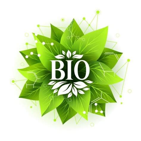 Bio Green bio label badge with green leaves vector 06 free