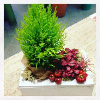 piante per casa piante di natale