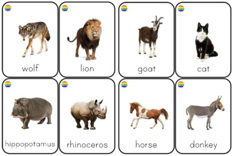 printable real animal flash cards dear zoo play ideas and printables for preschool you