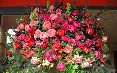 Garden Roses by Garden Roses Pictures Information Specs Flowers Gallery