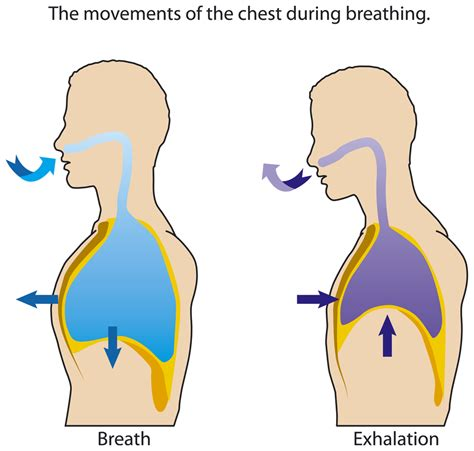 respiratory rate respirations from new to icu