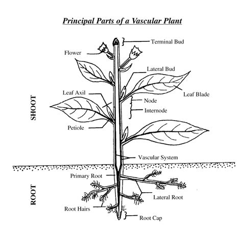 diagram of parts of a plant grow food hawaii yogarden festival 2014 basics of