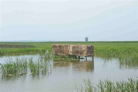 airboat duck blind duck blind heisterman island southern airboat picture