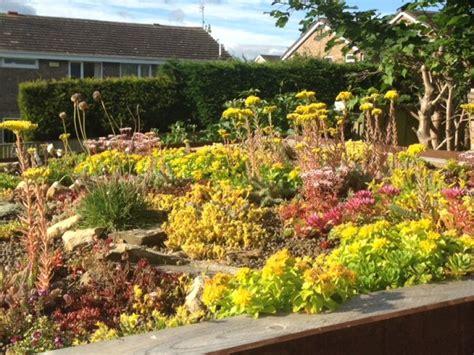 sedum plant green roof durham sky garden