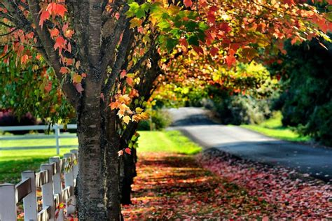 best fall colors in usa top 5 fall foliage spots in vancouver usa