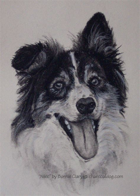 charcoal for dogs charcoal drawings of dogs