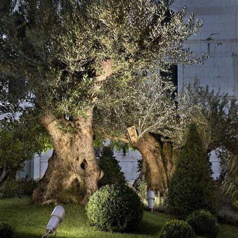 illuminazione alberi scopri la migliore illuminazione per valorizzare gli