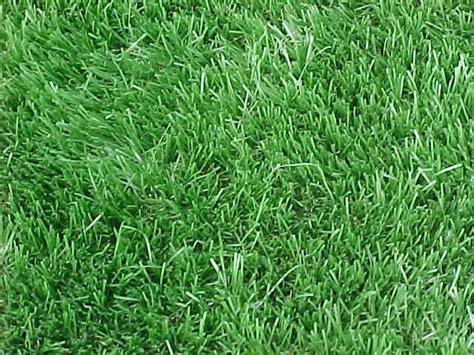 Grass Types by Cool Warm Season Turfs Tendercare Landscape
