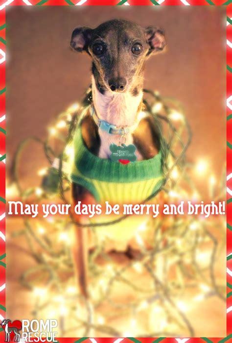 christmas card ideas   dog romp italian greyhound rescueromp italian greyhound rescue