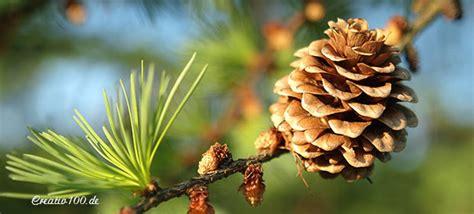 Baum Des Jahres 2012 5368 by Tag Des Baumes Creativ100 De