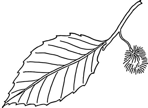 green leaf coloring pages leaf coloring pages 2 coloring ville