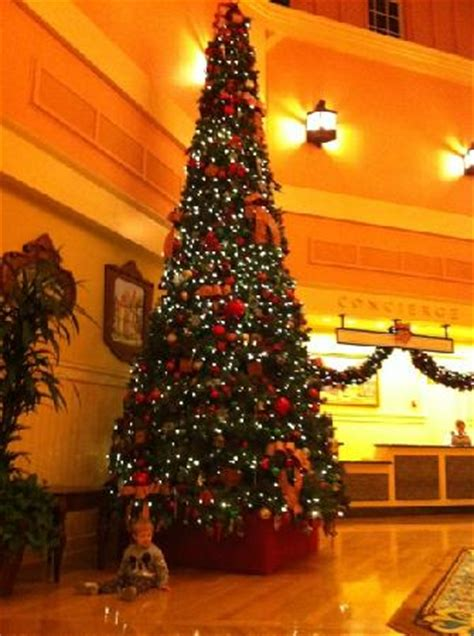 images of paddock pools christmas trees best christmas